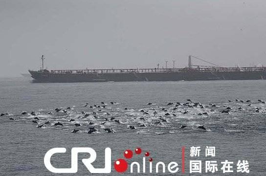 delfines se interponen a los piratas