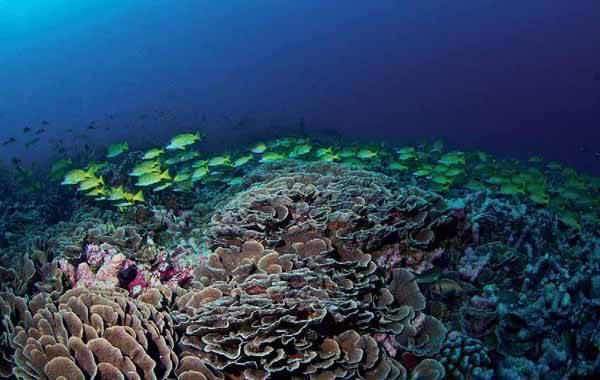 ecosistemas de coral en peligro