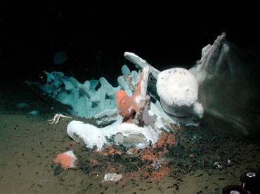 esqueleto de ballena en el fondo marino