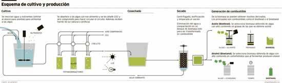 esquema generación biocombustible de algas