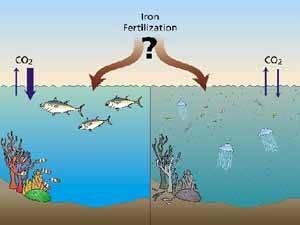 Fertilización del Océano, ¿bueno o malo?