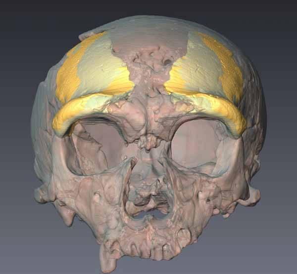 fósil de neanderthal de Zeeland, Holanda