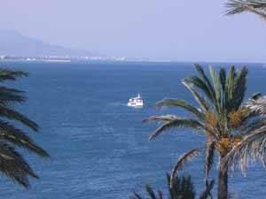 golondrina de peñíscola navegando, primer plano palmeras