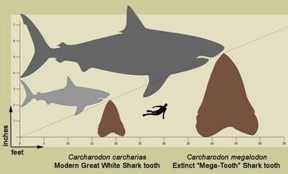 gráfico de dientes de tiburón
