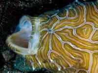 pez psicodélico