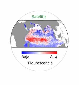 indian ocean, fluorescencia fitoplancton
