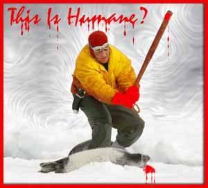 inhumana caza de focas