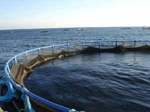 jaula de engorde de atún