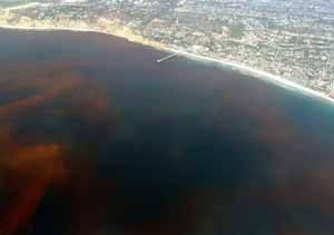 marea roja de algas nocivas