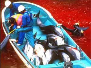 masacre de delfines