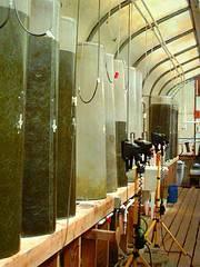 Laboratorio de microalgas
