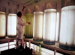 tanques de microalgas
