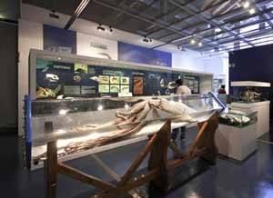 exposición Monstruos marinos, Gijón -calamar gigante