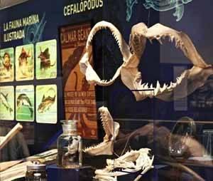exposición Monstruos marinos, Puerto Gijón -mandibulas