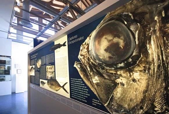 Exposición monstruos marinos, Gijón- detalle sala