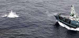 El barco japonés Nisshin Maru arponea una ballena