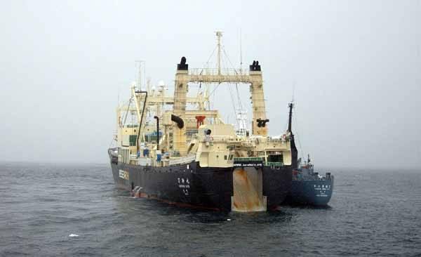 ballenero japonés Nisshin Maru