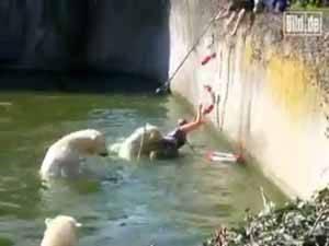 oso polar ataca a mujer zoo de Berlín