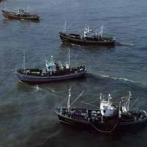 buques palangreros