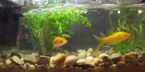 Pecera y pareja de peces