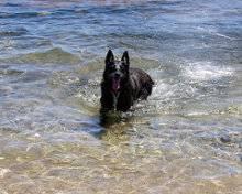 Perro en el agua del Mar