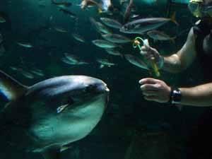 pez mola acuario de Gijón