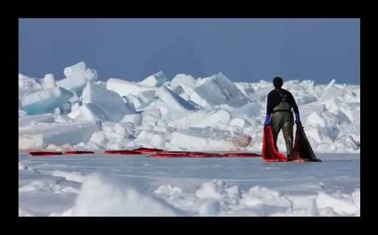 cazador arrastra pieles de foca ensangrentadas