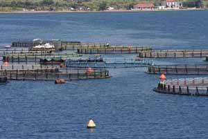 piscifactoria (proyecto aqua-nostrum)