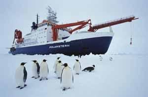 Fotografía de una antigua expedición del Polarstern junto a unos pingüinos