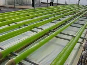 investigación para produccion de microalgas