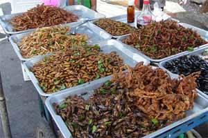 puesto de comida con insectos
