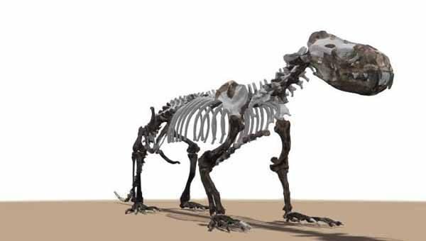 puijila darwini, reconstrucción del esqueleto