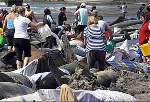 rescate de ballenas varadas