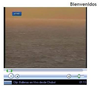 retranmisión en vivo Vigilia de las Ballenas