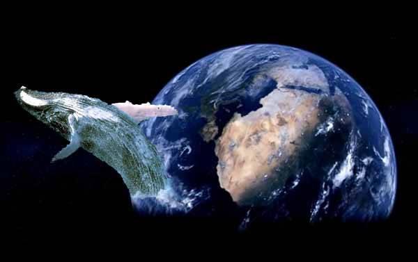 santuario global para las ballenas
