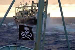 Sea shepherd acosa a un ballenero japonés
