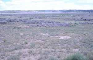 suelo para posible cultivo de algas
