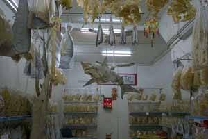 tienda de partes de tiburón en Hong Kong