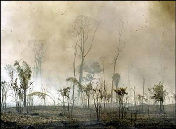 tierras quemadas en el Amazonas