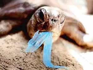 tortuga ingiere un plástico