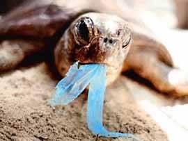 tortuga comiendo un plástico