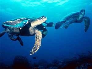 tortugas marinas de las Islas Galápagos
