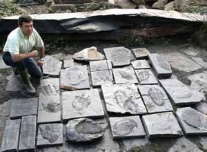trilobites gigantes en Portugal
