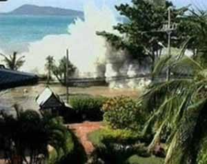 tsunami 2004 contra las palmeras