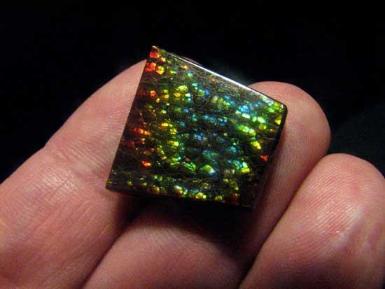 amonita, piedra preciosa