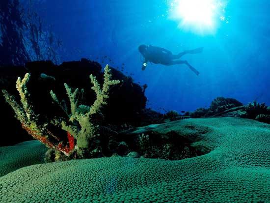 biodiversidad en el Mediterráneo