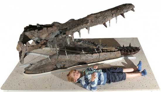 cráneo del pliosaurio de dorset junto a un niño