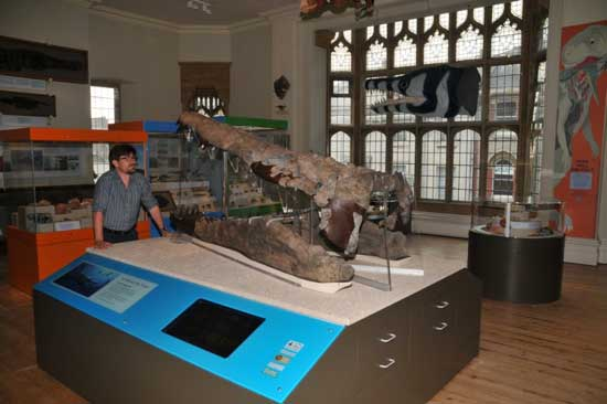 cráneo de pliosaurio en el Museo de Dorset