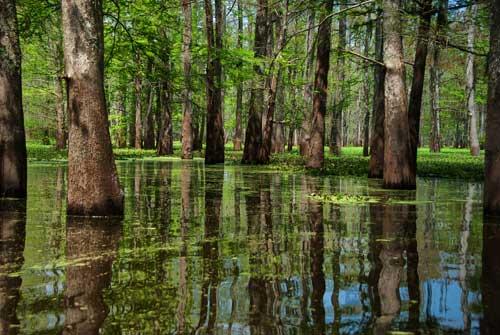 cuenca de Atchafalaya, Llouisiana EE.UU.