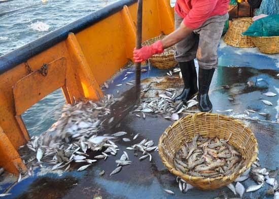 descartes en la pesca de gamba en Sonora, México
